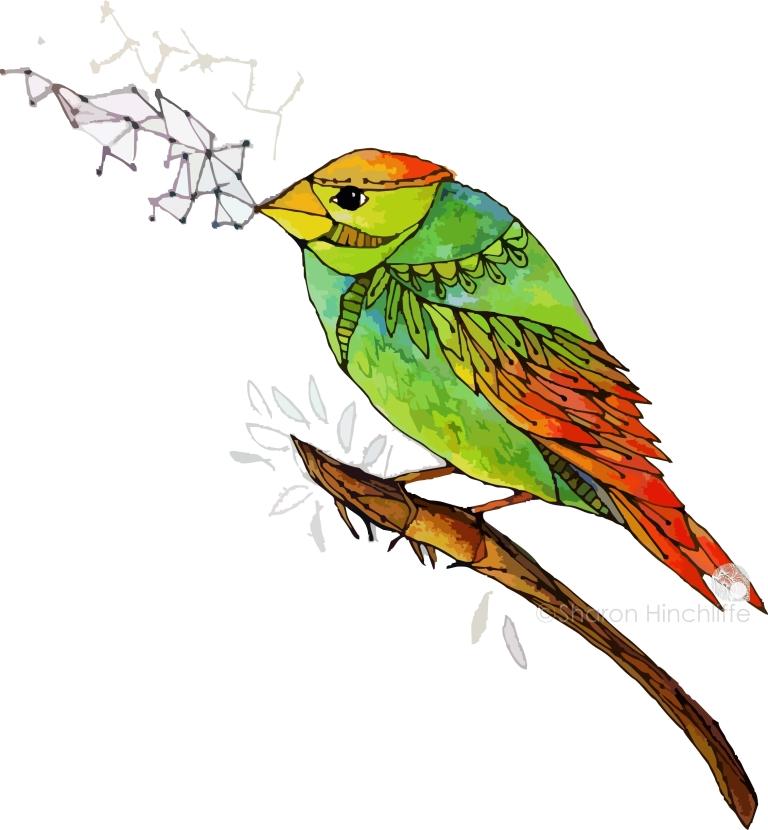 13bird2a